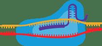 Oligo_LP_CRISPR_icon
