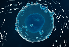 web-citation_sperm_egg