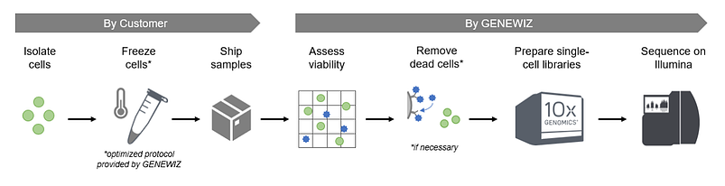 Single_Cell_ATAC_Workflow