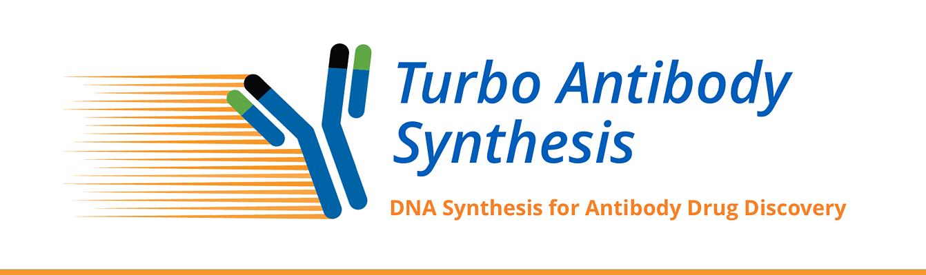 Antibody DNA Synthesis Service