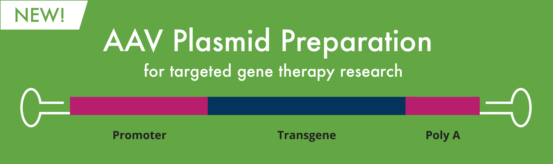 AAV Plasmid Preparation